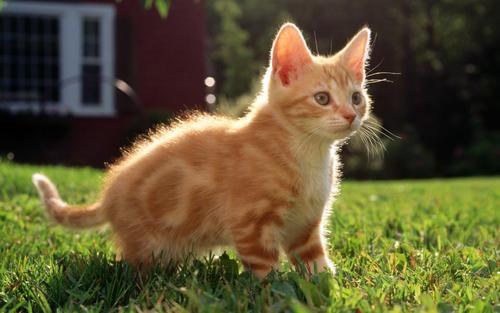 养猫常有的6个误区|铲屎官必看!插图(2)