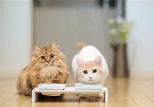 养猫常有的6个误区|铲屎官必看!插图(1)