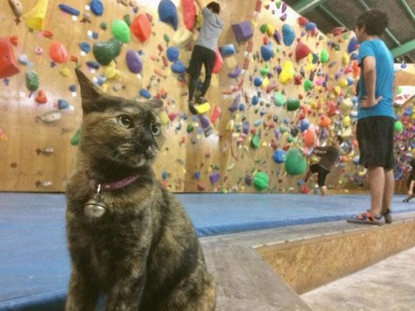 流浪猫靠着观摩别人攀岩,成为了攀岩高手,还因此升职成为了经理插图