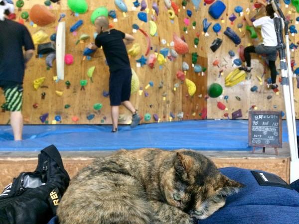 流浪猫靠着观摩别人攀岩,成为了攀岩高手,还因此升职成为了经理插图(3)