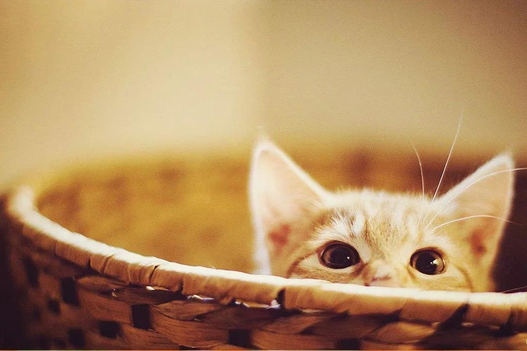 养猫干货 | 如何让猫咪香喷喷插图(1)