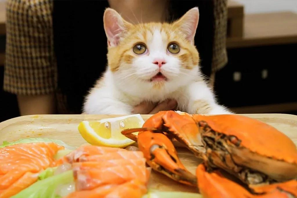 养猫干货 | 如何让猫咪香喷喷插图(3)