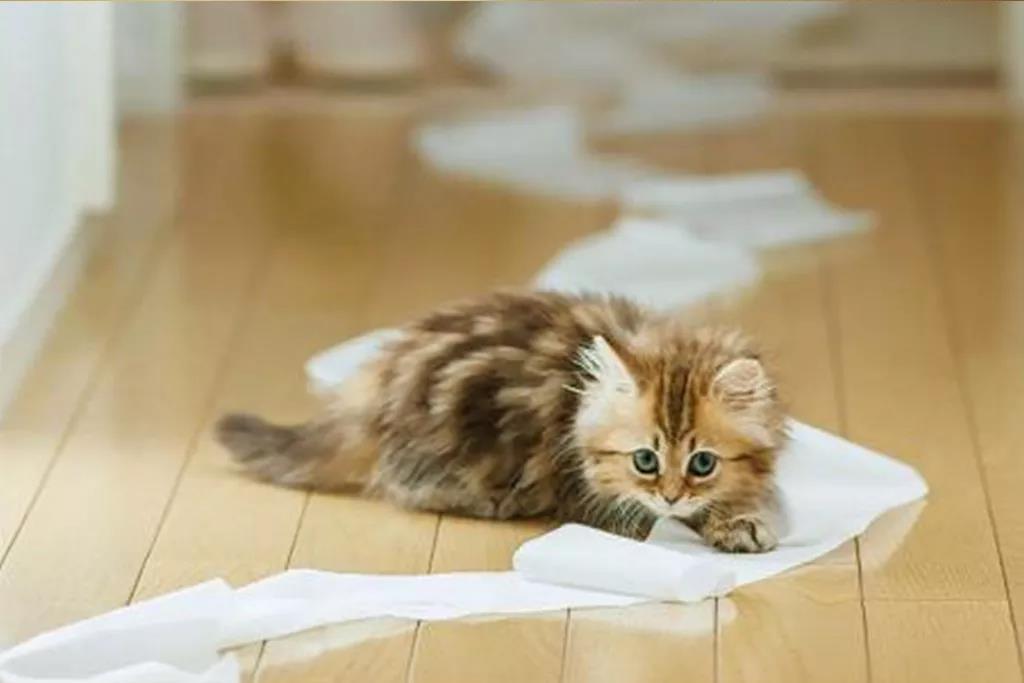 养猫干货 | 如何让猫咪香喷喷插图(4)