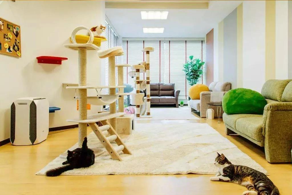 养猫干货 | 如何让猫咪香喷喷插图(5)