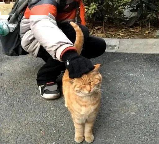 橘猫被弃养,无奈中又包含一丝希望插图