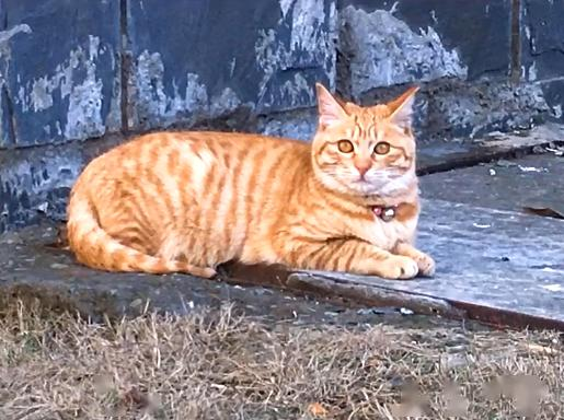 橘猫被弃养,无奈中又包含一丝希望插图(1)