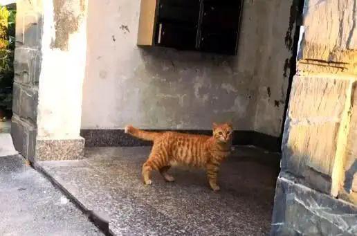橘猫被弃养,无奈中又包含一丝希望插图(2)