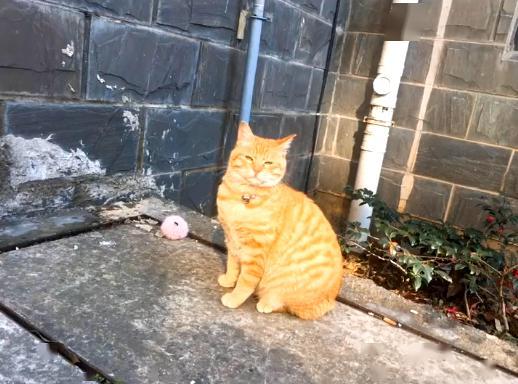 橘猫被弃养,无奈中又包含一丝希望插图(3)