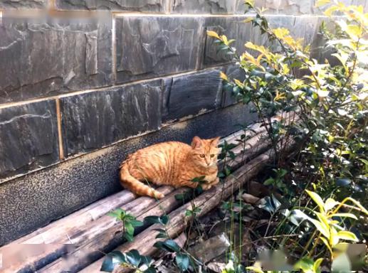 橘猫被弃养,无奈中又包含一丝希望插图(4)