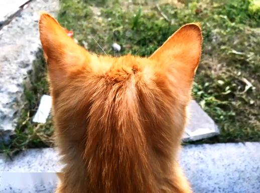 橘猫被弃养,无奈中又包含一丝希望插图(5)
