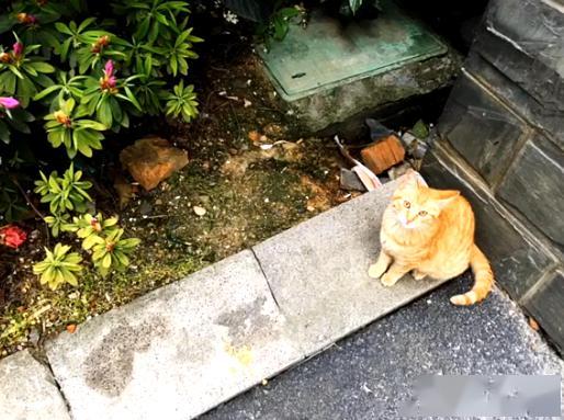 橘猫被弃养,无奈中又包含一丝希望插图(6)