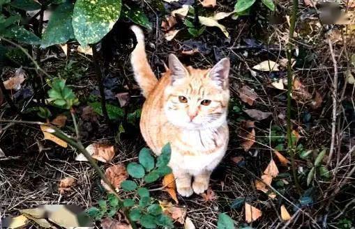 橘猫被弃养,无奈中又包含一丝希望插图(7)