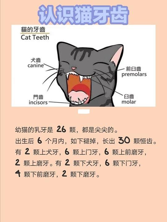 养猫必看|猫咪刷牙攻略,预防猫咪牙周病插图