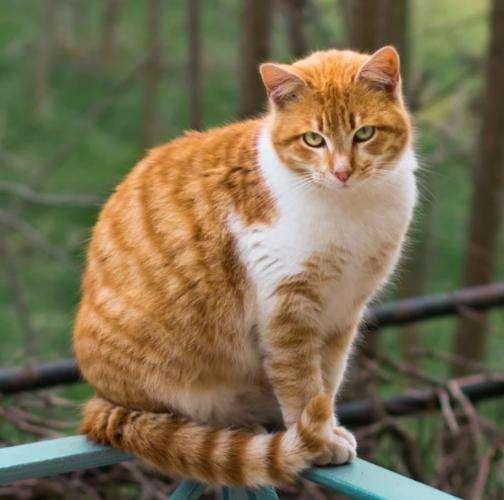 猫咪品种介绍|中华田园猫插图(1)
