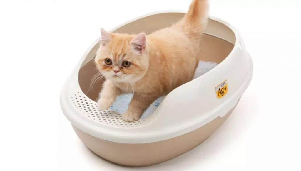 猫咪最讨厌的味道,一定注意别粘上!插图(5)