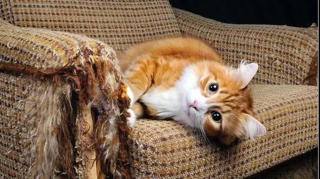 猫咪最讨厌的味道,一定注意别粘上!插图(6)