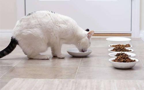 猫咪喂食6大误区!你真的会养猫吗?插图(1)