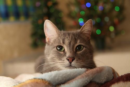 爱猫,就请拒绝猫咪去爪术插图(1)