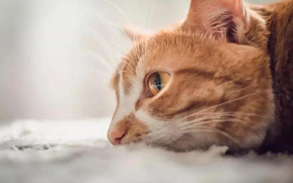 猫咪用生命换来的教训,疫苗不要打在这里!插图(5)