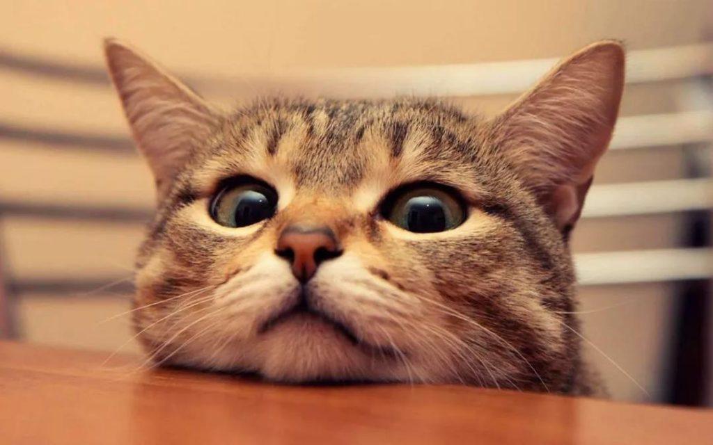 猫咪用生命换来的教训,疫苗不要打在这里!插图(8)