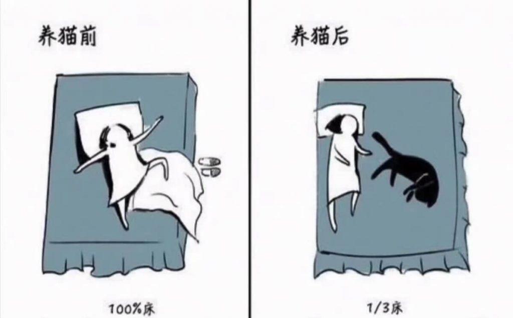 养猫前后生活对比,可以说是非常真实了插图(7)