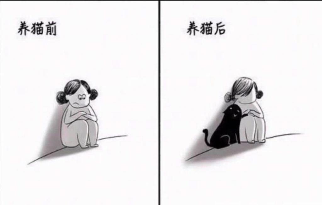 养猫前后生活对比,可以说是非常真实了插图(4)