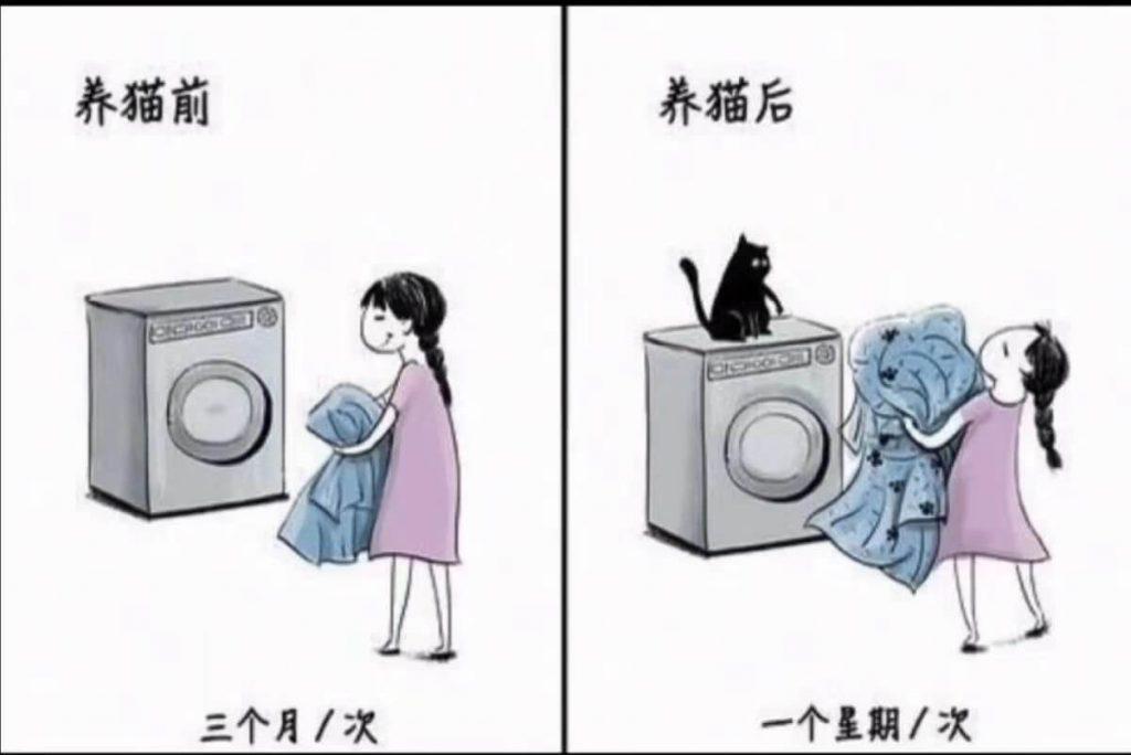 养猫前后生活对比,可以说是非常真实了插图(3)