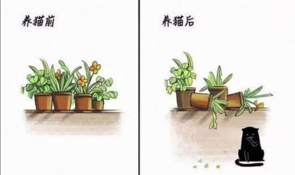 养猫前后生活对比,可以说是非常真实了插图(2)