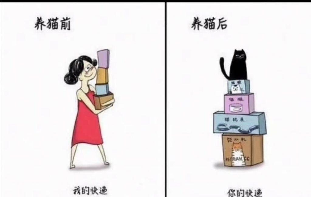 养猫前后生活对比,可以说是非常真实了插图(1)